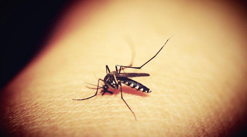 Mosquito Bites